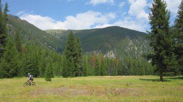 Blue Joint Meadow
