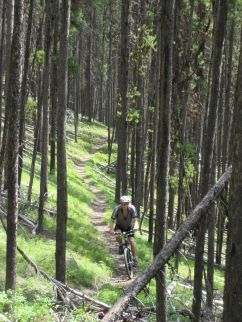 Wooded Singletrack