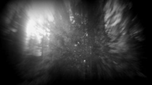 Gallatin Forest Dweller