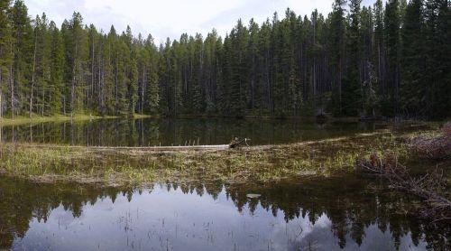 Gallatin Pond