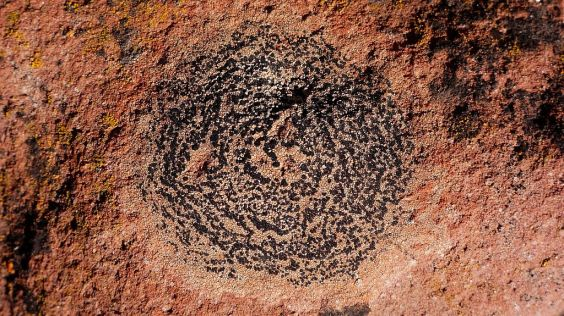 Spore Circle