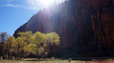 Hop Valley Shade Tree