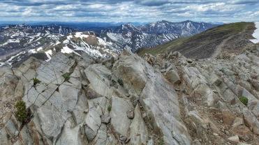 Mountain Squirel