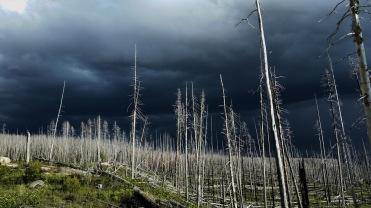 Storm Trees