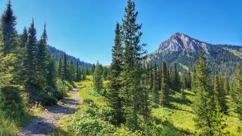 The trail to Ross Pass