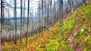 Elk Creek Ride