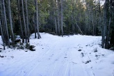 McClay clearing trail on FS lands.