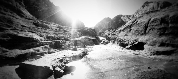 Ice tree and Sun