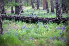 Purple Log purple log