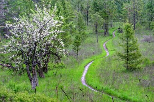 A trail runs through it.