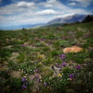 Wildflowers at summits