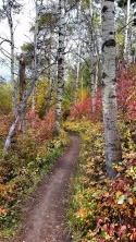 The triple tree trail in bozeman