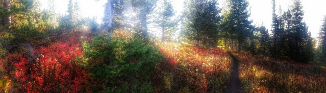 A panorama of the Fall colors coming down the Chestnut Ridge