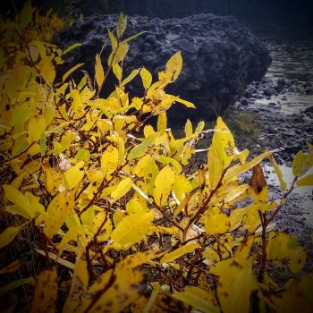 Yellow to black