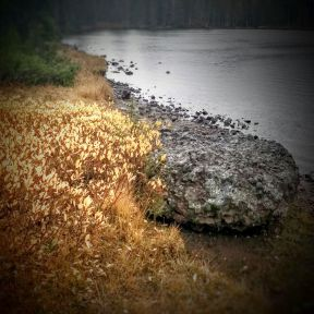 Foliage, rocks, and the lake