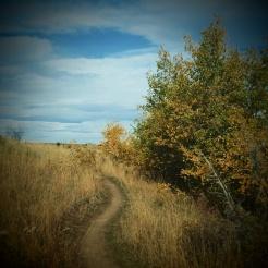 Cow pasture trails