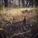 Frolicking near Cherry Creek ... or is it Bozeman creek?