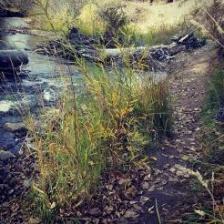 Just below the headwall on Bridger Creek