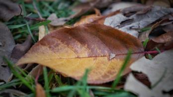 A fallen leaf shows seasonal wear