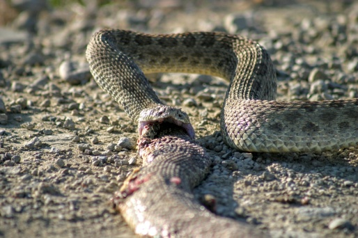 I think both snakes were victims of a run over