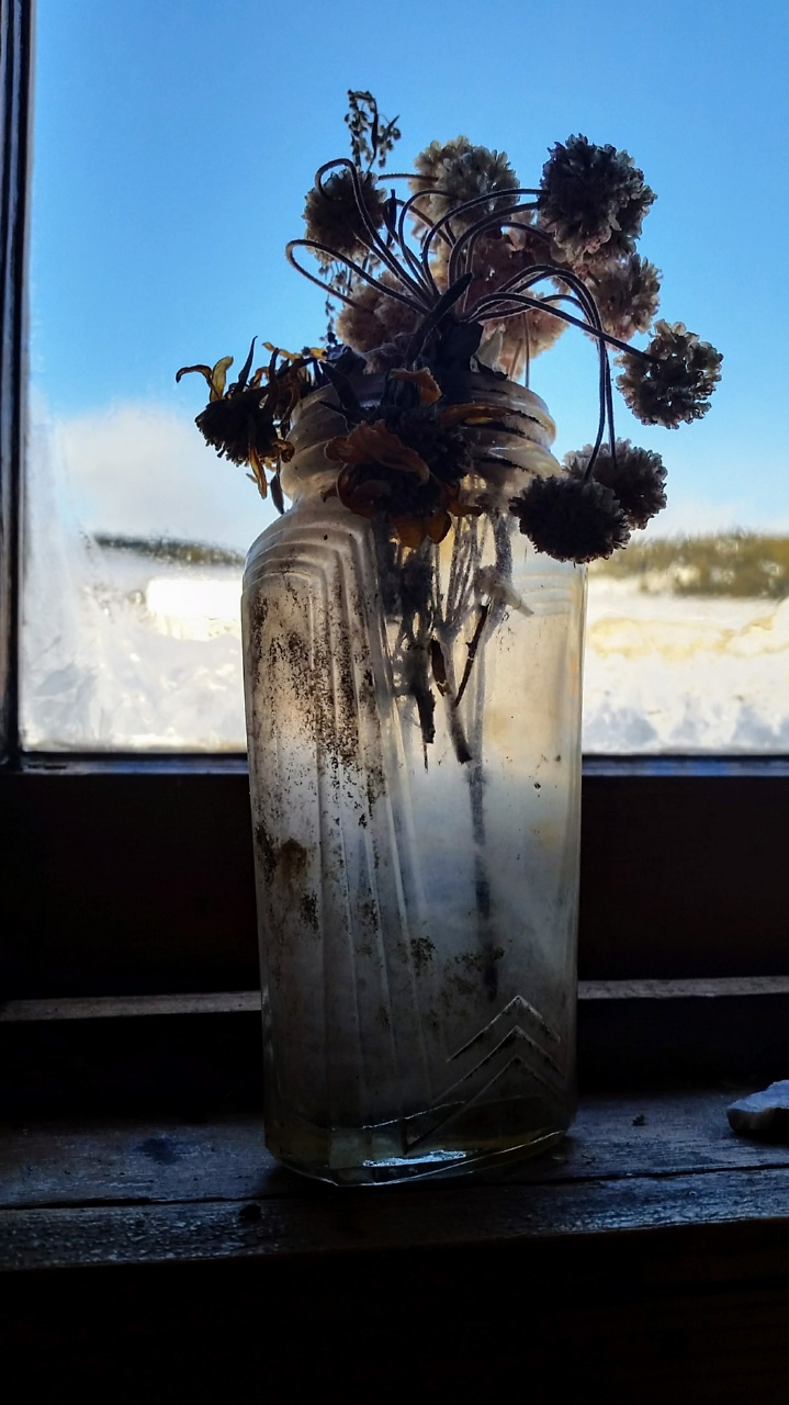 Flowers frozen in time