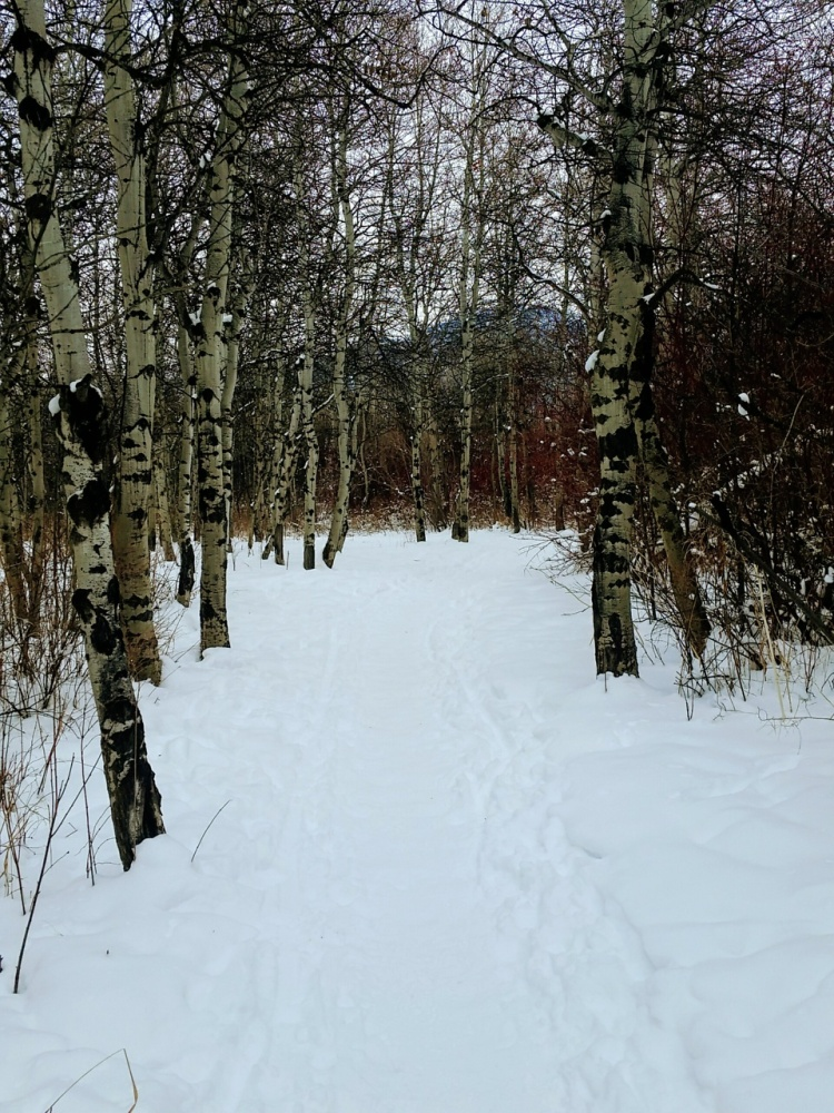 Bozeman Urban Trails