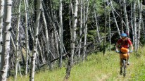 Aspen forests