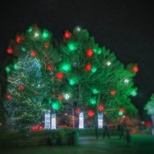 Big pine lights