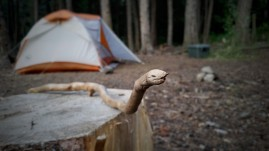 We hit the sack early because the hike in was going to be a big climb all the while Sneaky Snake stood guard.