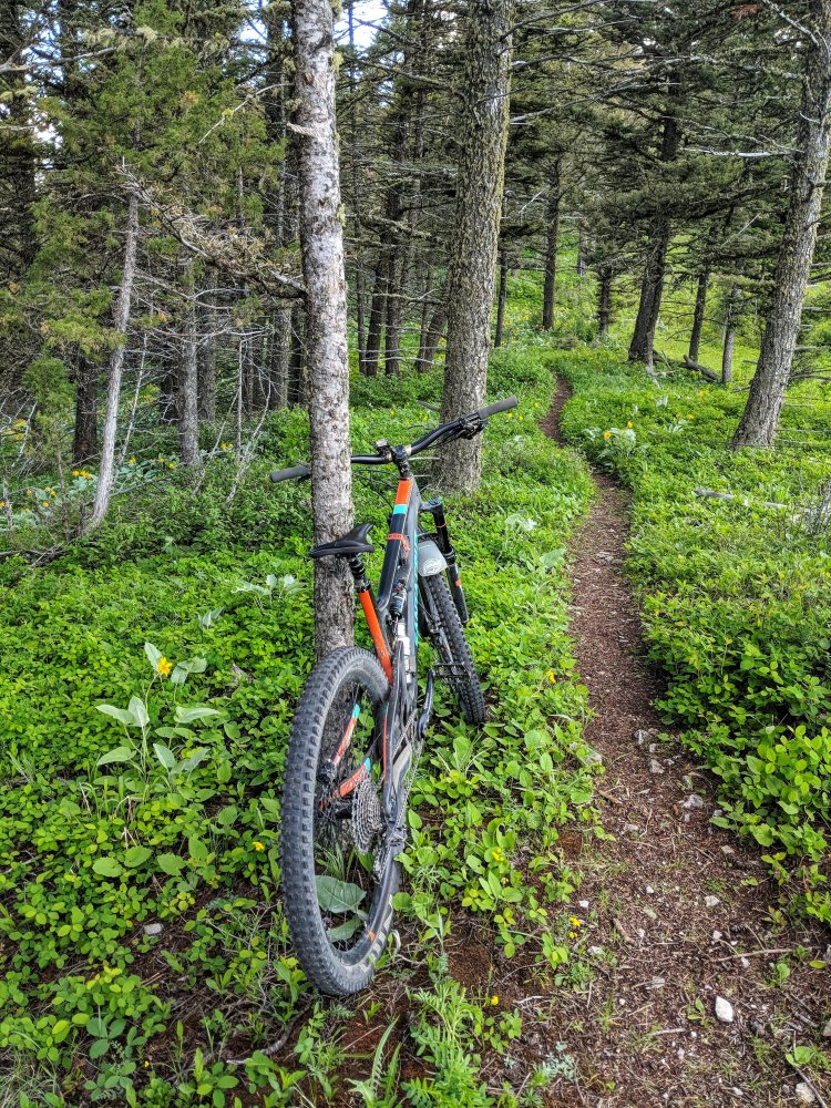 Suce Trail