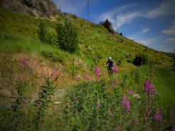 Mo comes down through the wildflowers as we come back down Pine Creek on the old road.