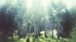 Meadows and trees with a sprinkle of sunlight