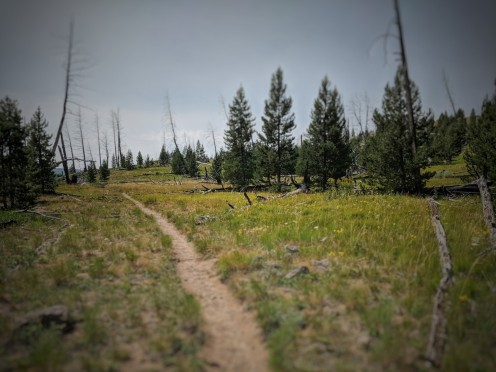 The hike, once we locked our bikes, started out as a nice path through the grass. We rode to the trail via the Bunsen Peak Trail from Mammoth.