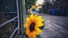 Flowering alleys