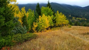 Fall Foliage on Suce Creek