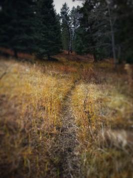 Aspen lost their leaves already
