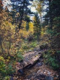 Suce Creek Trail.