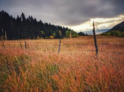 Fence line with brome.
