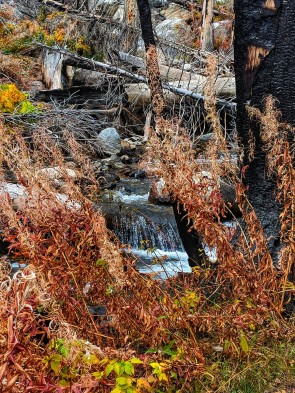 Fireweed long gone