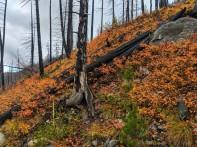 Orange hillsides