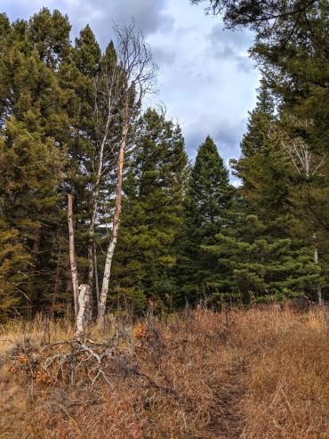 Dead tree singletrack