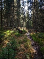 Some fantastic wooded singletrack